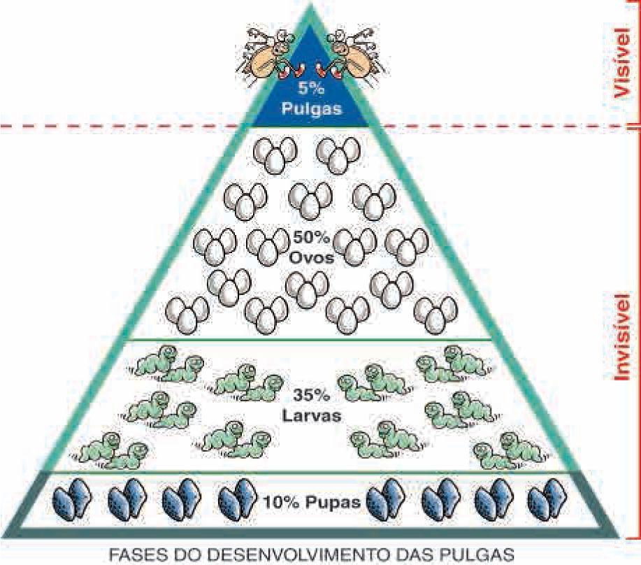 Anti Pulgas e Carrapatos para cães entre 20 e 40kg Frontline