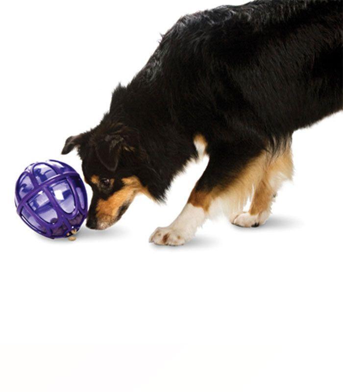 Brinquedo e alimentador interativo para cães Kibble Nibble Amicus