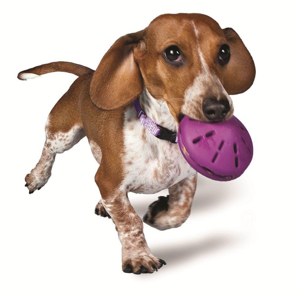 Brinquedo mordedor e porta petisco ou ração para Cães Twist n Treat Amicus P 8cm - libera petiscos