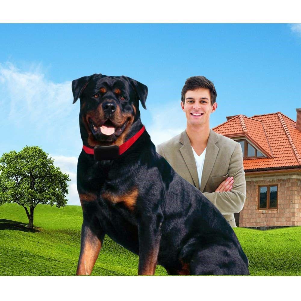 Coleira eletrônica de adestramento com sistema inteligente de adestramento para cachorro 4 a 20Kg  SIT Amicus