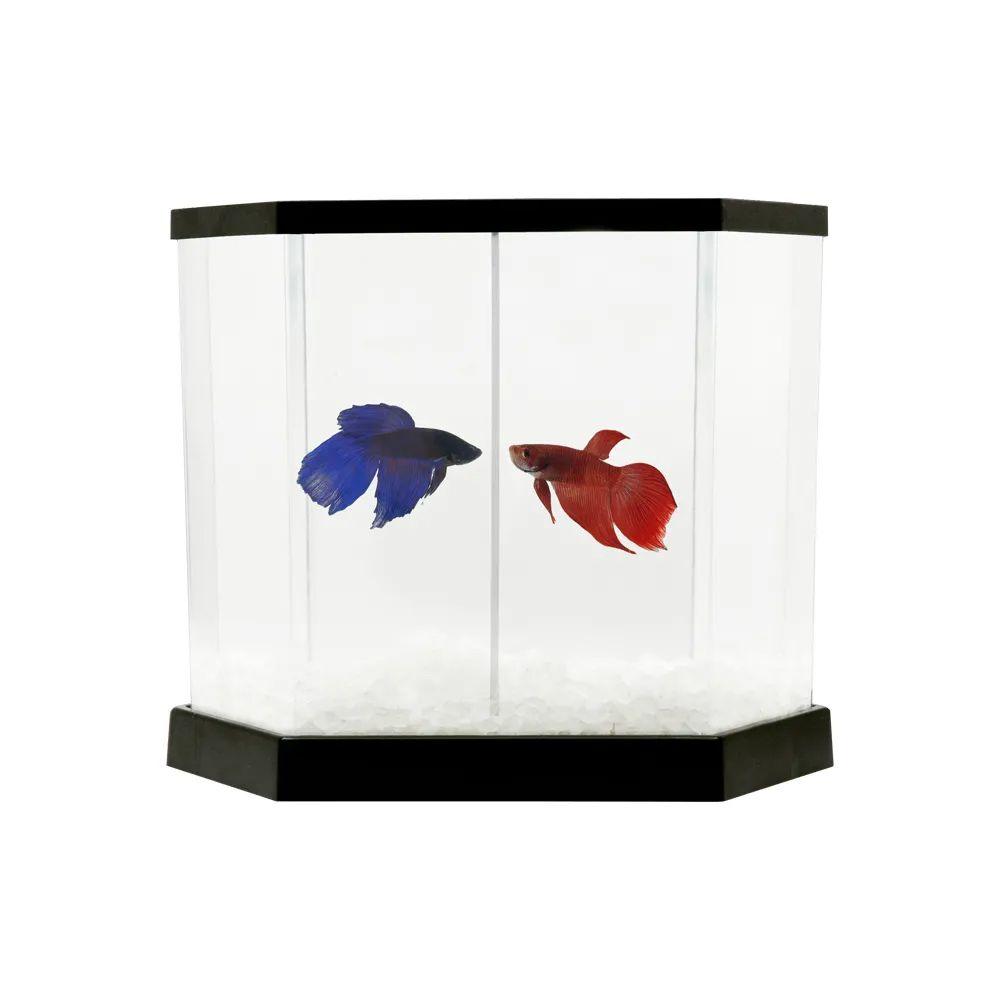 Kit aquário para peixe Betta - Beteira plástica Betta-Flex 5,5 litros - Transparente / Preto