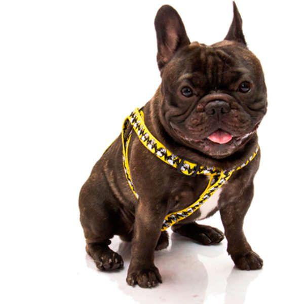 Peitoral para cachorro Zooz Pets Snoopy Charlie Brown Amarela tamanho M (Ajustável 45 - 65cm)
