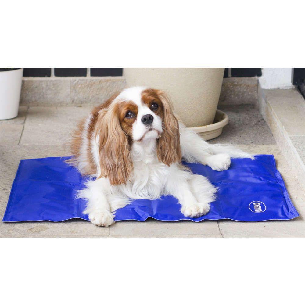 Tapete Gelado para cachorros Chalesco Pet Cooling Mat Colchonete Refrescante para cachorro Tam M (50 x 64cm)