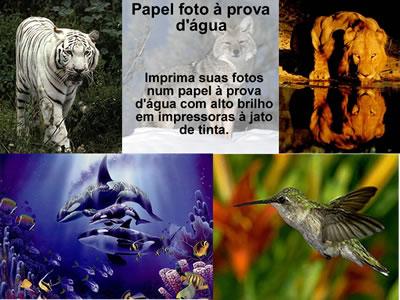 Papel 240gr Foto a Prova de água 20 Folhas A4 Alto Brilho