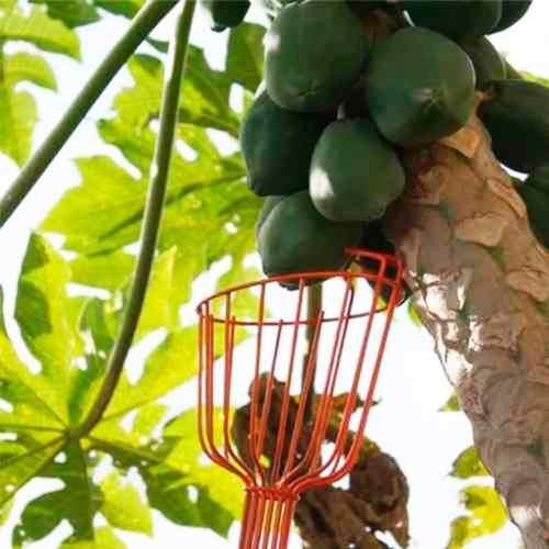 Colhedor De Frutas Sem Cabo 77819/151 - Tramontina