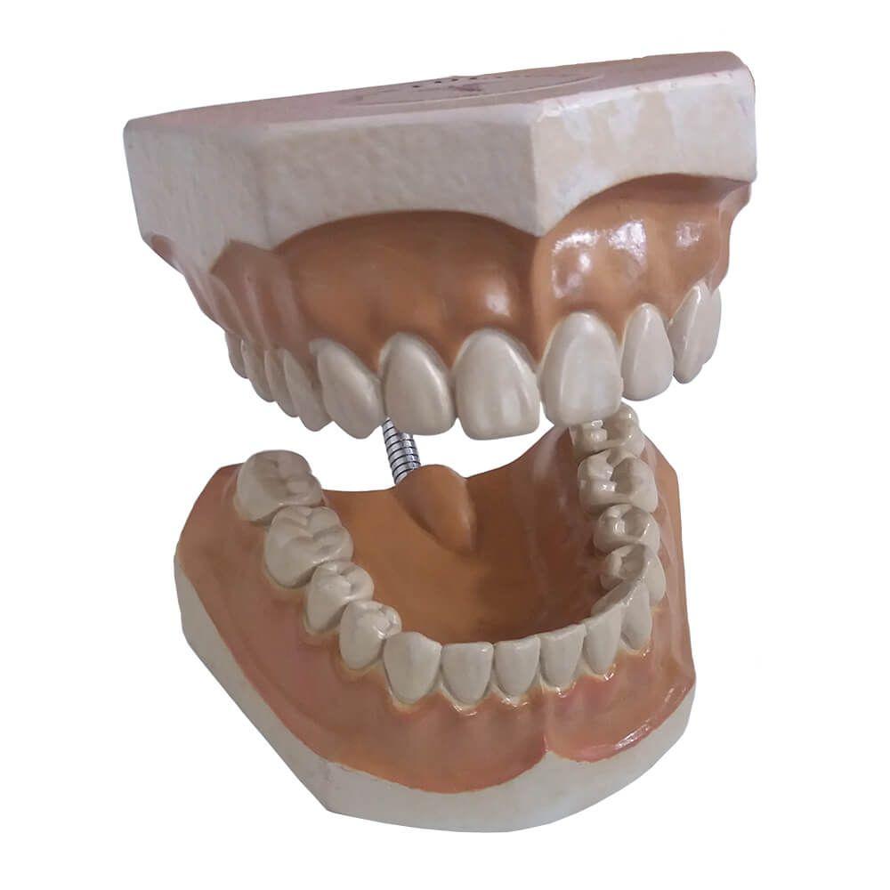 Macro Modelo Escovação - Fanto Dentes