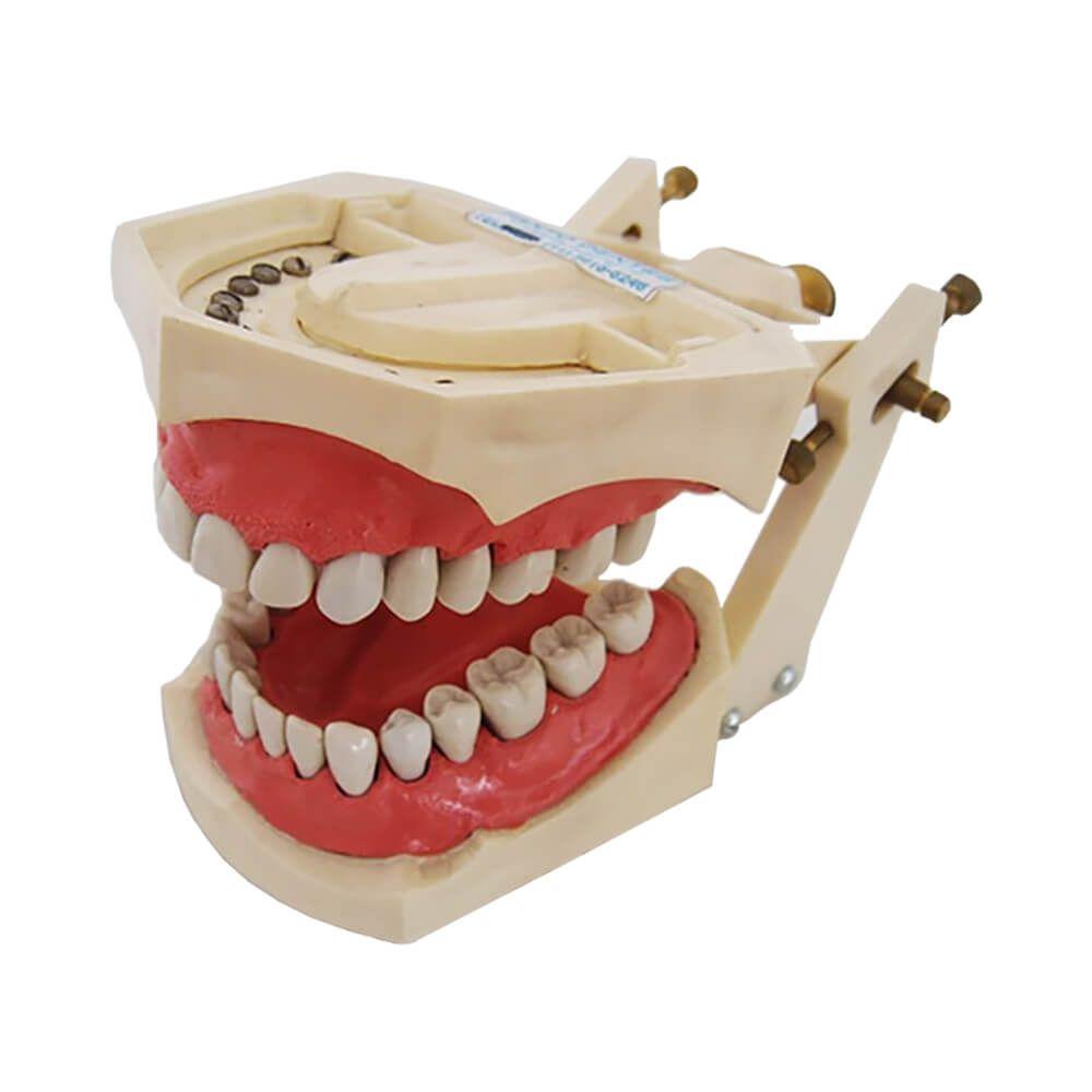 Manequim de Dentística, Prótese, Escultura e Materiais Dentários - Fanto Dentes