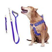 Coleira Peitoral Guia Cinto Segurança Cachorro Doberman Pitbull Anti Puxao - M Azul