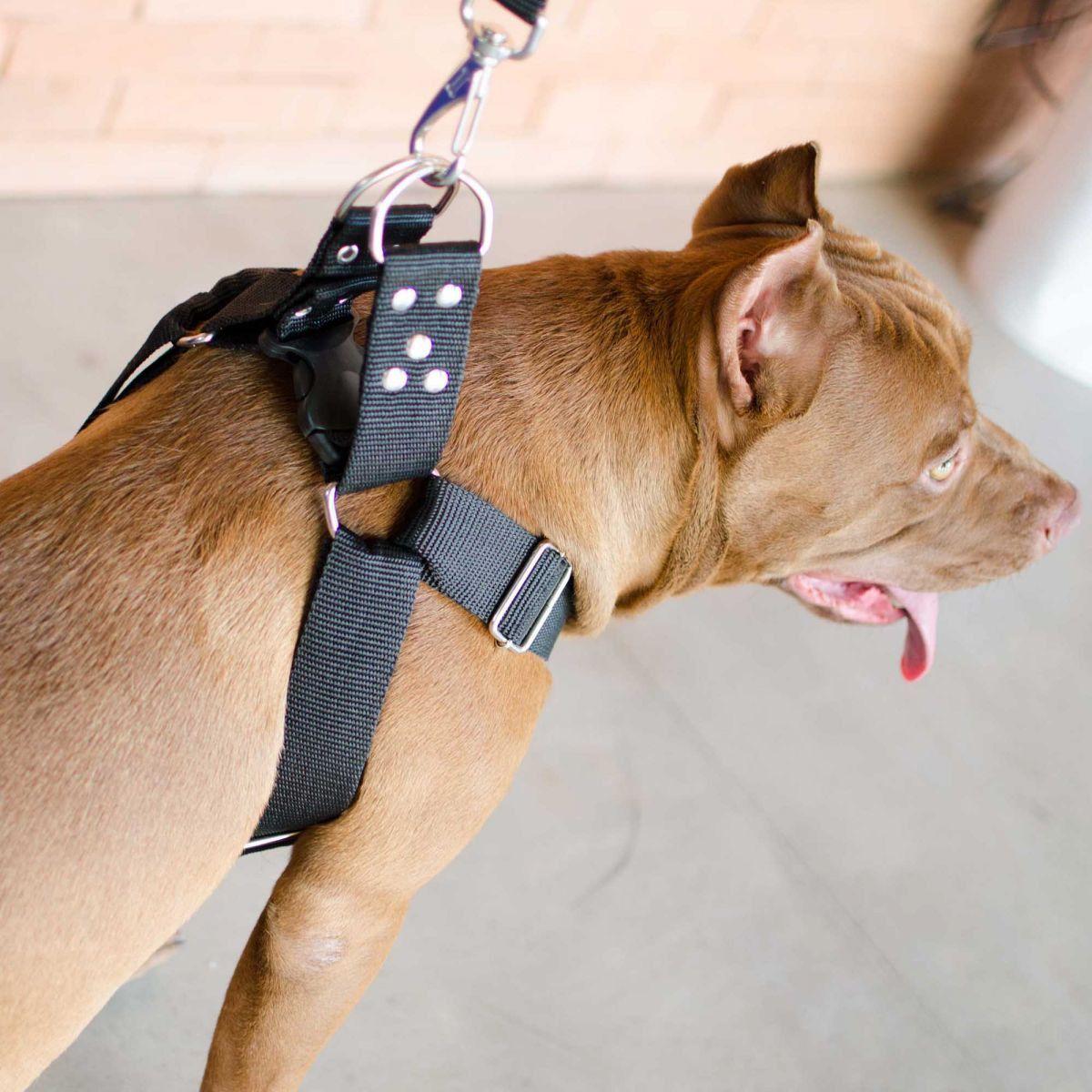 Coleira Peitoral Cachorro Porte Maior E Adaptador Para Cinto de Segurança Veicular Tamanho M - Cor Preta