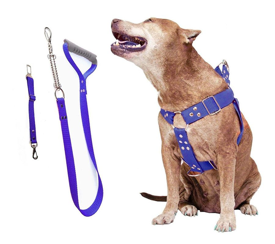 Coleira Peitoral Guia Cinto Segurança Cachorro Doberman Pitbull Anti Puxao - G Azul