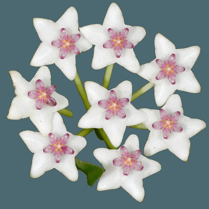 kit flor de cera diversas cores