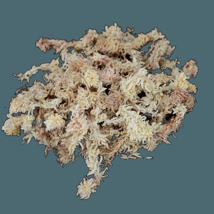 Sphagnum - musgo seco - 500 gramas