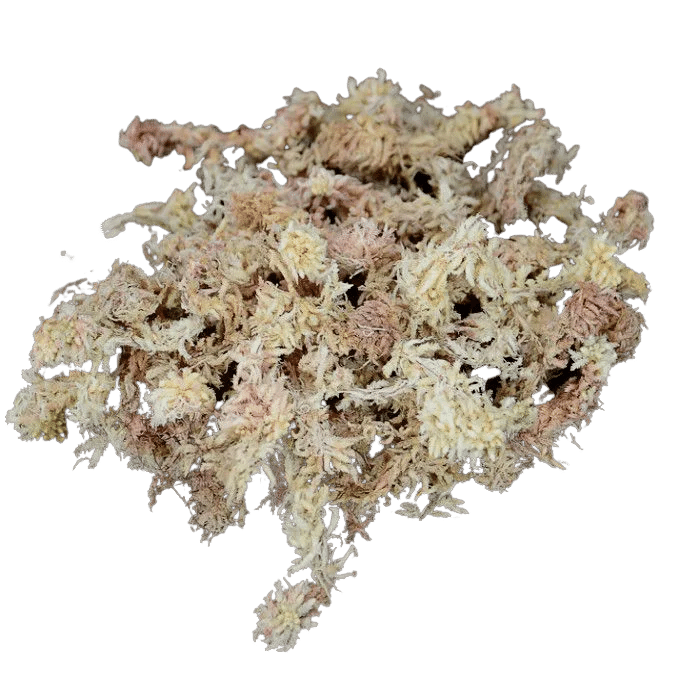 Sphagnum - musgo seco - esfagno - 1 kg