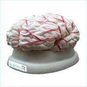 Cérebro em 8 Partes