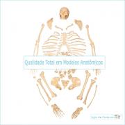 Esqueleto Humano Desarticulado 168 cm