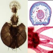 Lâminas preparadas ensino Fundamental - Biologia (25 espécies)