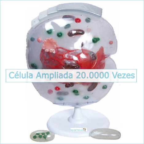 Célula Ampliada Aproximadamente 20 mil Vezes