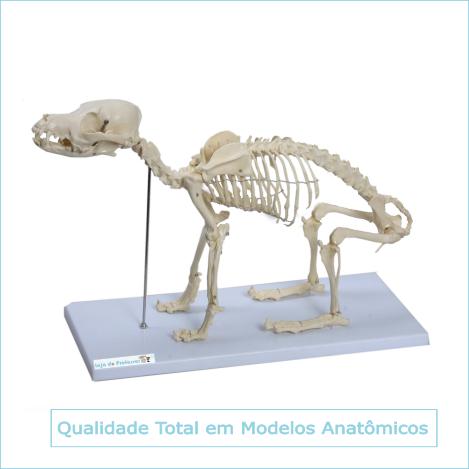 Esqueleto de Cachorro