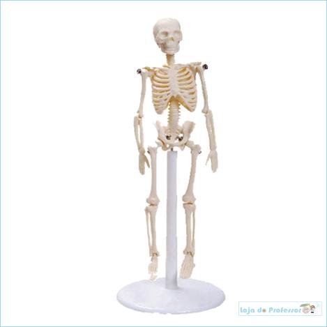 Esqueleto de mesa de 20 cm