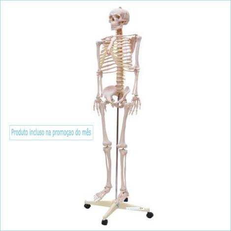 Esqueleto Escolar 170 cm c/ suporte e rodas