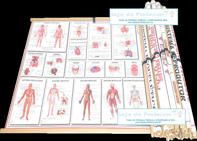 Kit de Mapas de Anatomia c/ Molduras (kit 18 mapas)