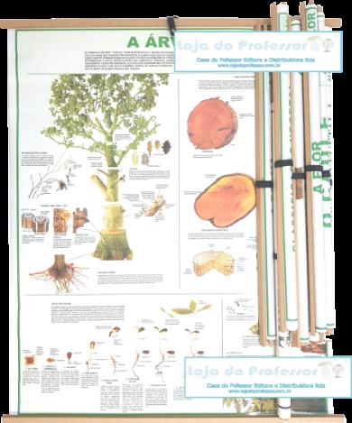 KIT Mapas de Botânica com molduras (Kit Completo c/ 10 Mapas)