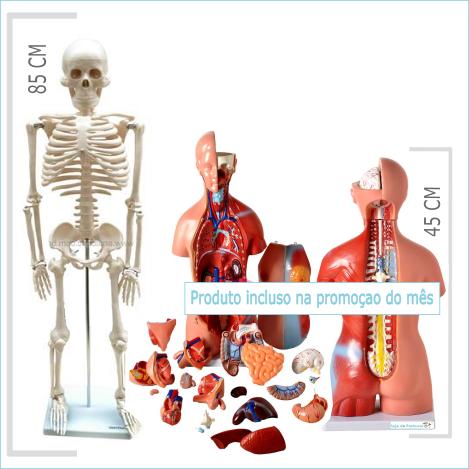 """Torso 45 cm + Esqueleto de 85 cm """"Kit Escolar"""""""