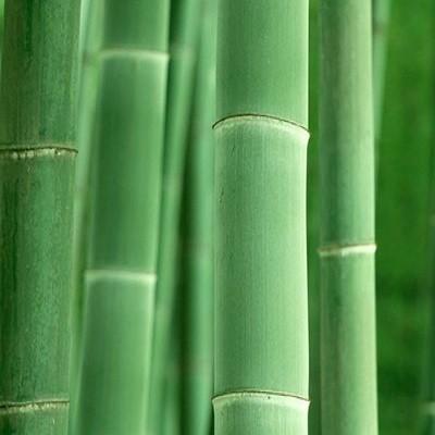 Essência Bamboo MM