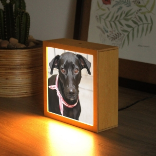 Luminária Personalizada - Pet