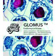 kit Glomus + Pro-B Fungos e Micorrizas