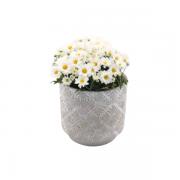 Vaso Cachepot de Cimento GX36020-3