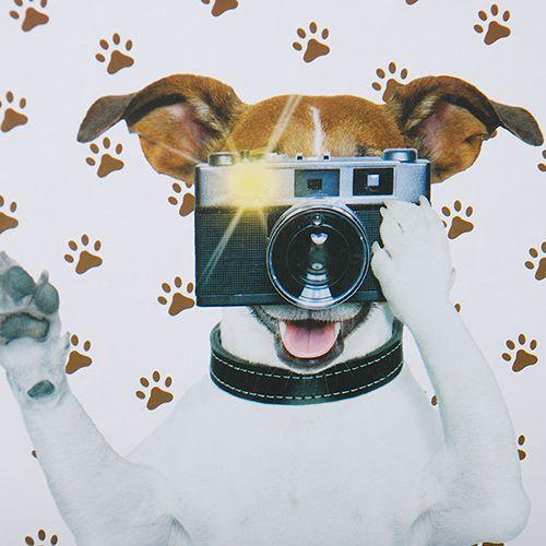 Álbum 200 Fotos 10x15 Cute Rec 103/08