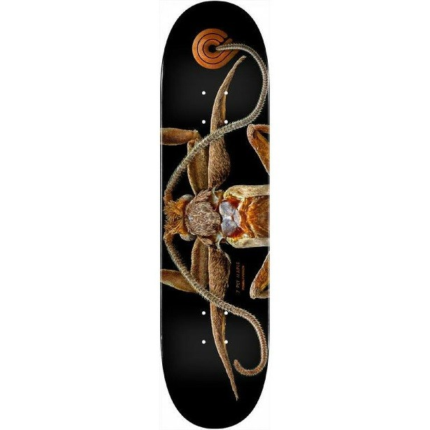 Shape Powell Peralta Biss Marion Moth 8.25