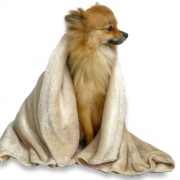 Cobertor Pet em Microfibra