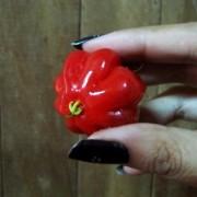 Muda Da Pitanga Gigante Vermelha - Enxertada