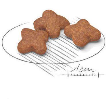 Ração Royal Canin Mini Adult 8+ para Cães Adultos de Raças Pequenas com 8 Anos ou mais 2.5Kg