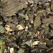 Chá Verde Nacional (Ban-chá) 100g