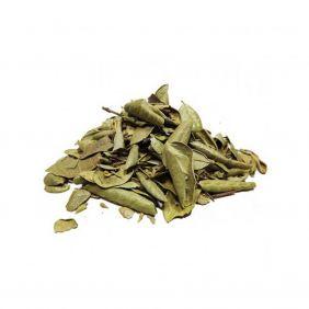 Chá de Boldo em Folhas