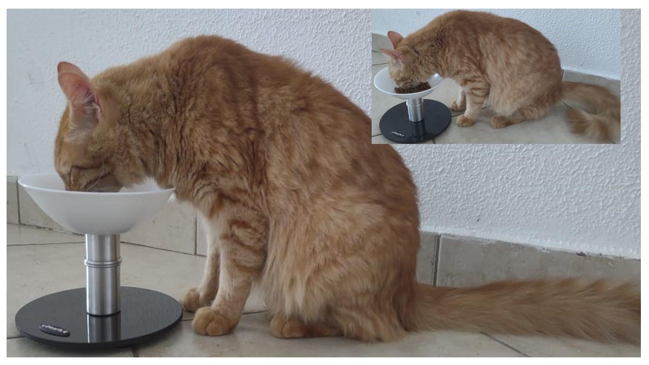 Comedouro para gatos em opaline, antifadiga de bigodes, ELEVADO, resistente à maresia, não enferruja, não contém aço carbono(ferro), nem madeira