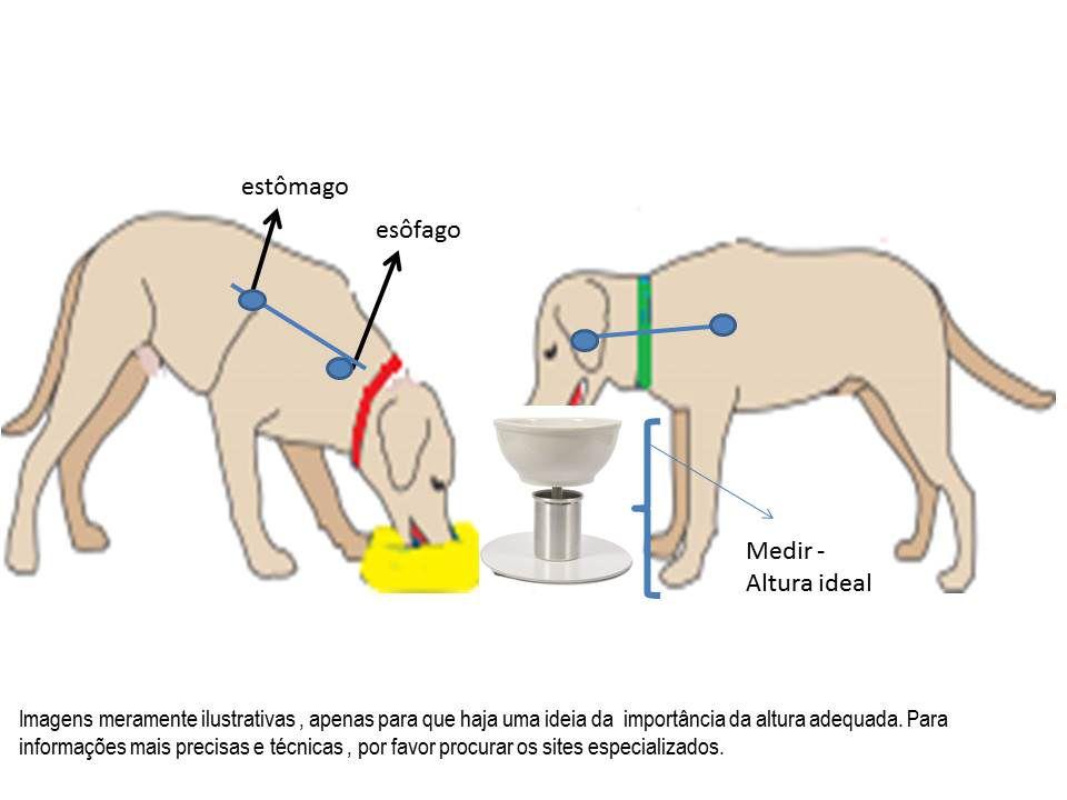 Comedouro/Bebedouro cães e gatos, porcelana, regulador de altura. Resistente à maresia, não enferruja porque não contém aço carbono (ferro) e nem madeira.