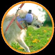 Fone De Ouvido Para Cachorro - Tamanho 2 roxo - é na foneland