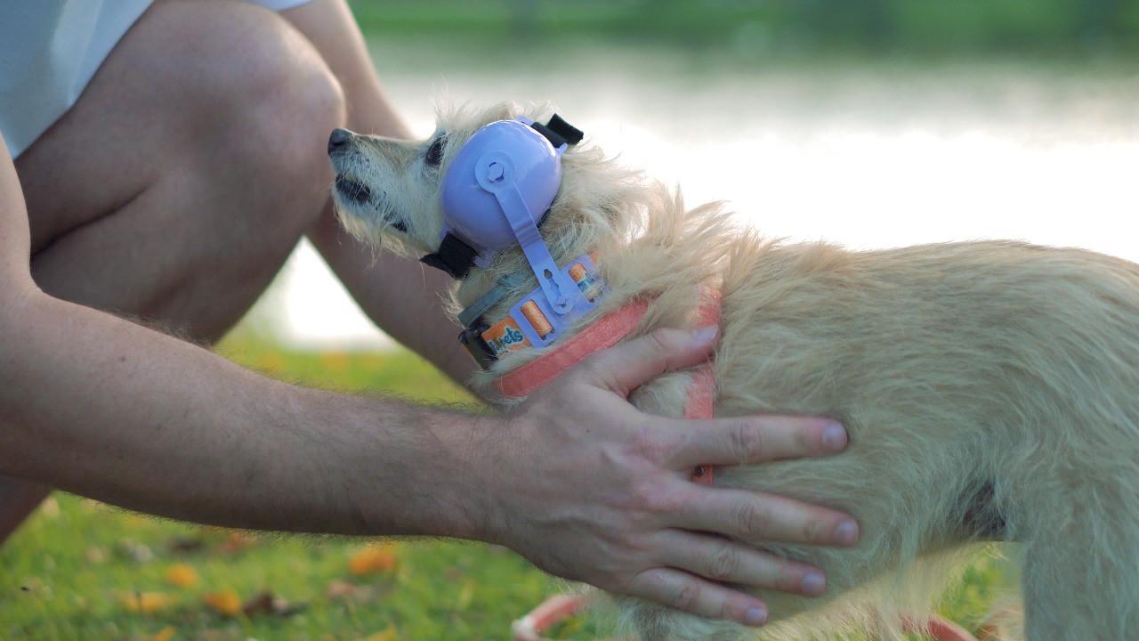 Fone De Ouvido Para Cachorro - Tamanho 1 azul