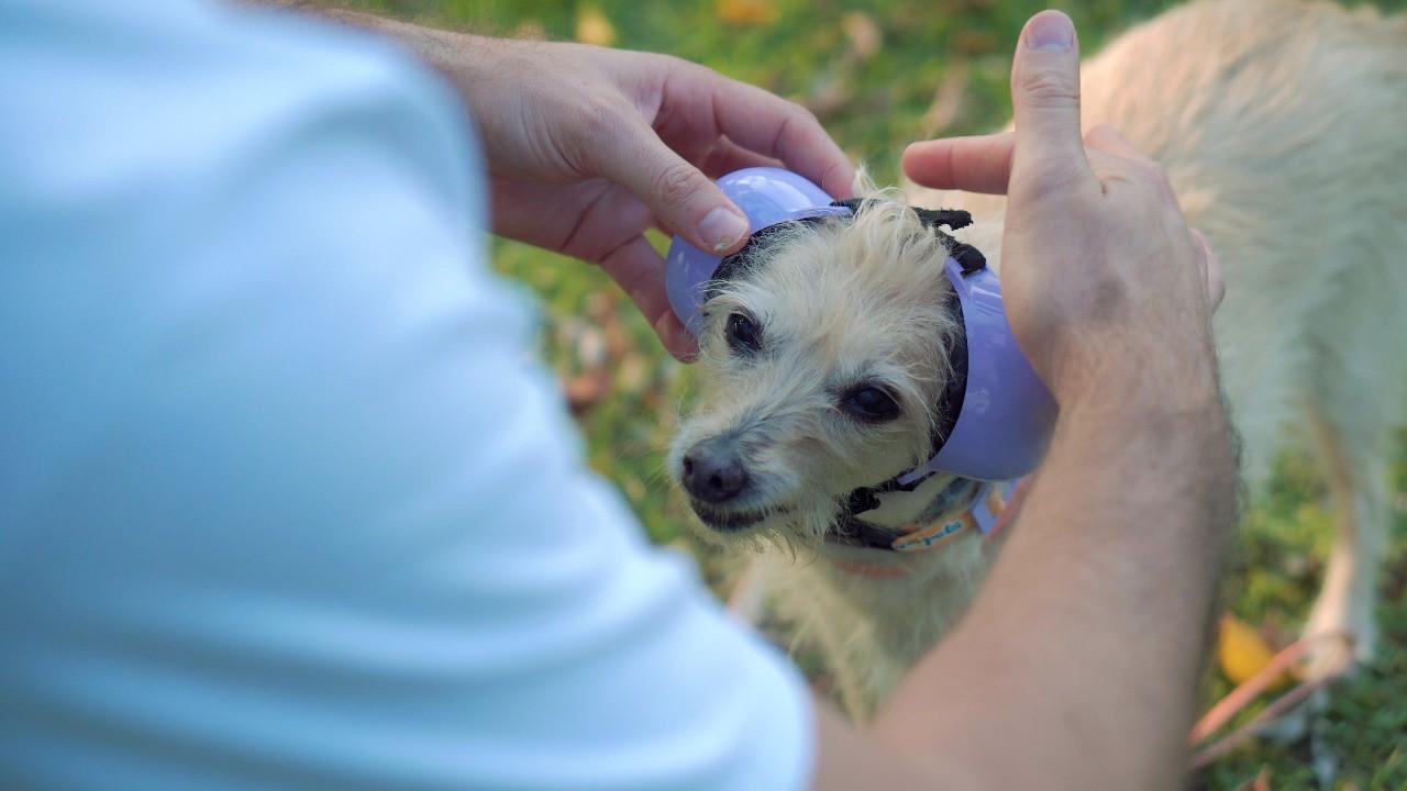 Fone De Ouvido Para Cachorro - Tamanho 2 azul