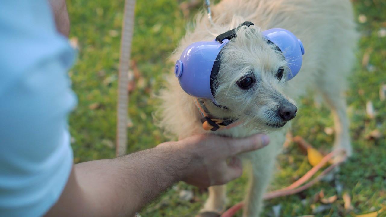 Fone De Ouvido Para Cachorro - Tamanho 3 azul