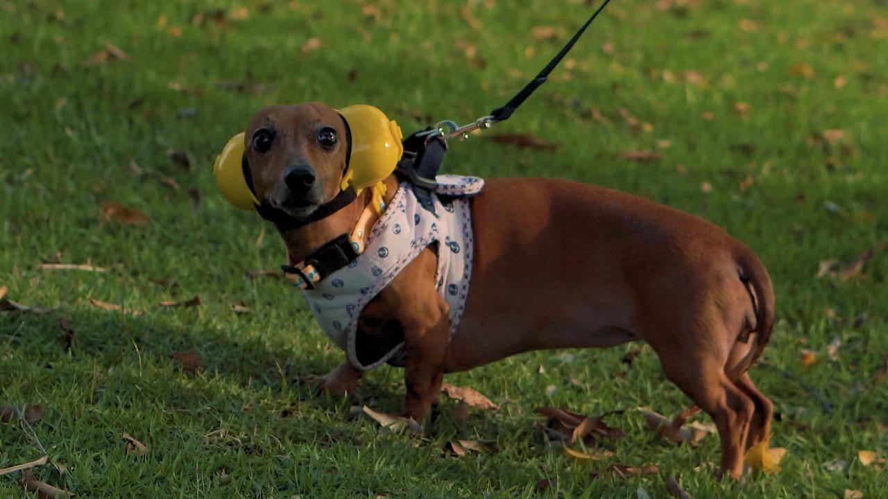 Fone De Ouvido Para Cachorro - Tamanho 4 vermelho