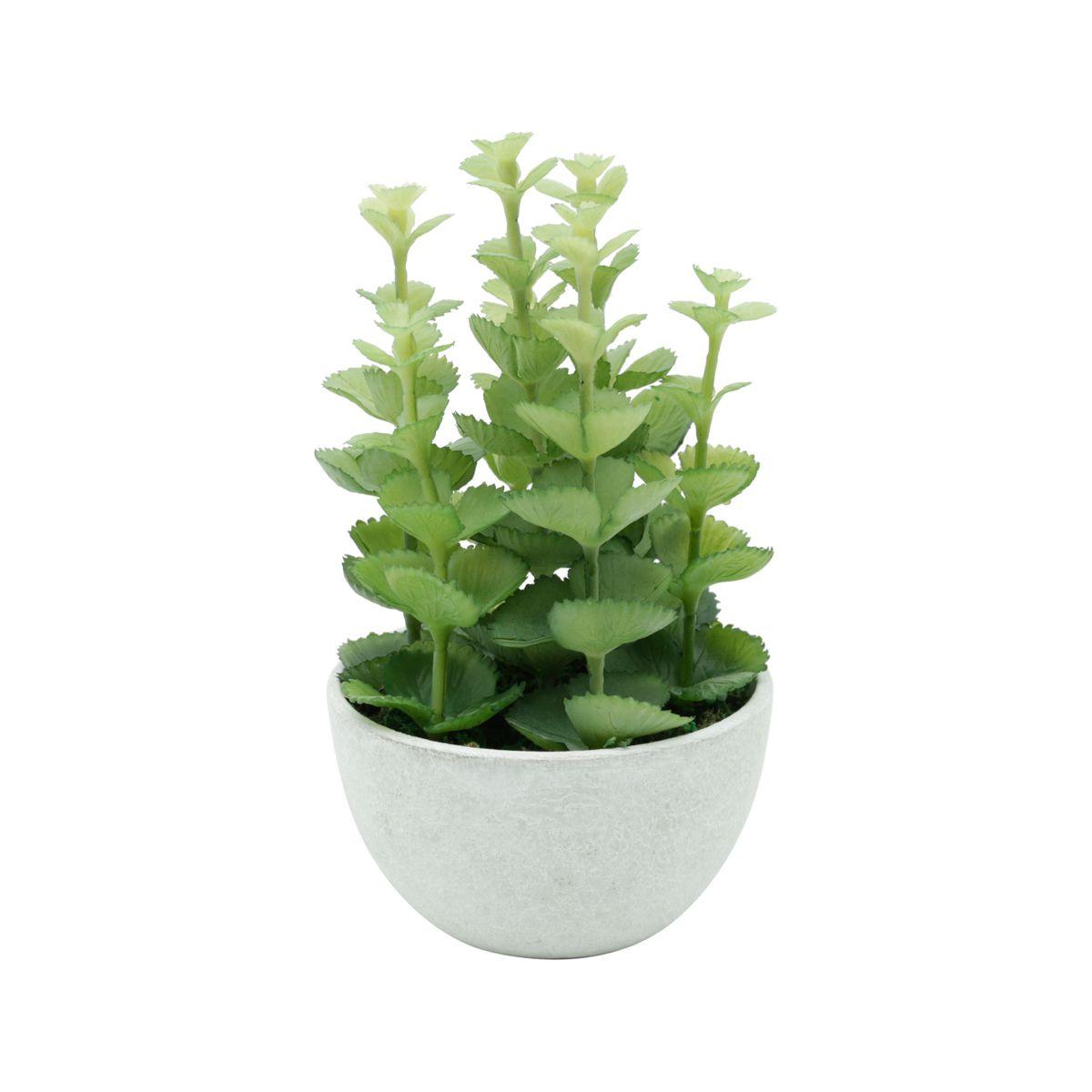Vaso Plástico E Metal Crassula Plant Branco E Verde 10,5X10,5X18Cm - Urban