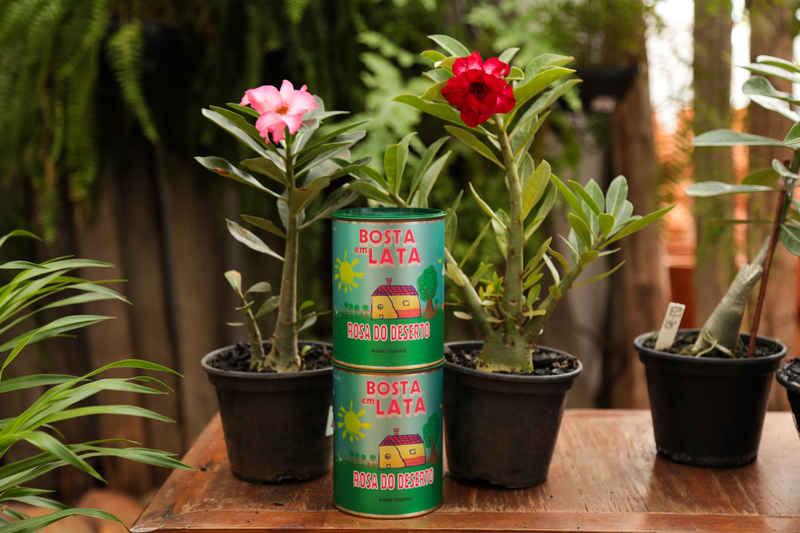 Adubo Orgânico para Rosa do Deserto - Bosta em Lata 500g