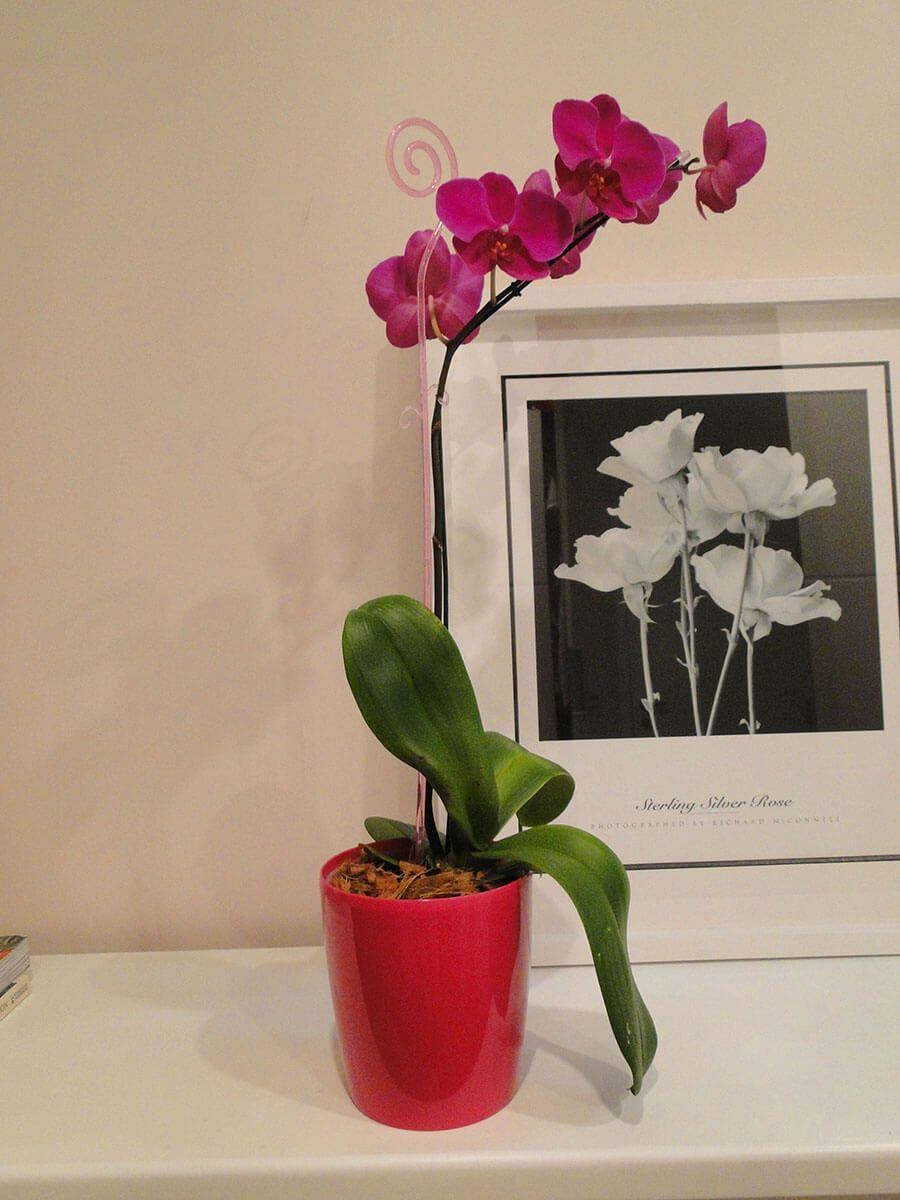 Vaso Orquidea 15 x 16 cm Branco Vasart