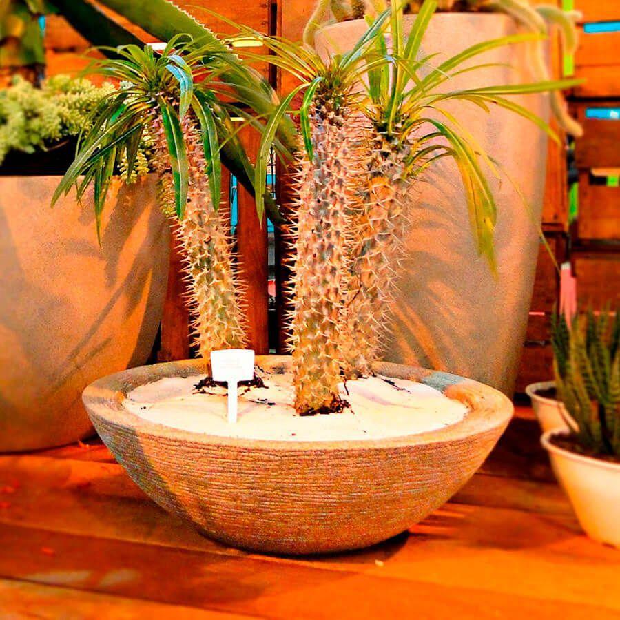 Vaso Terra Bowl 55 x 16 cm Preto Vasart
