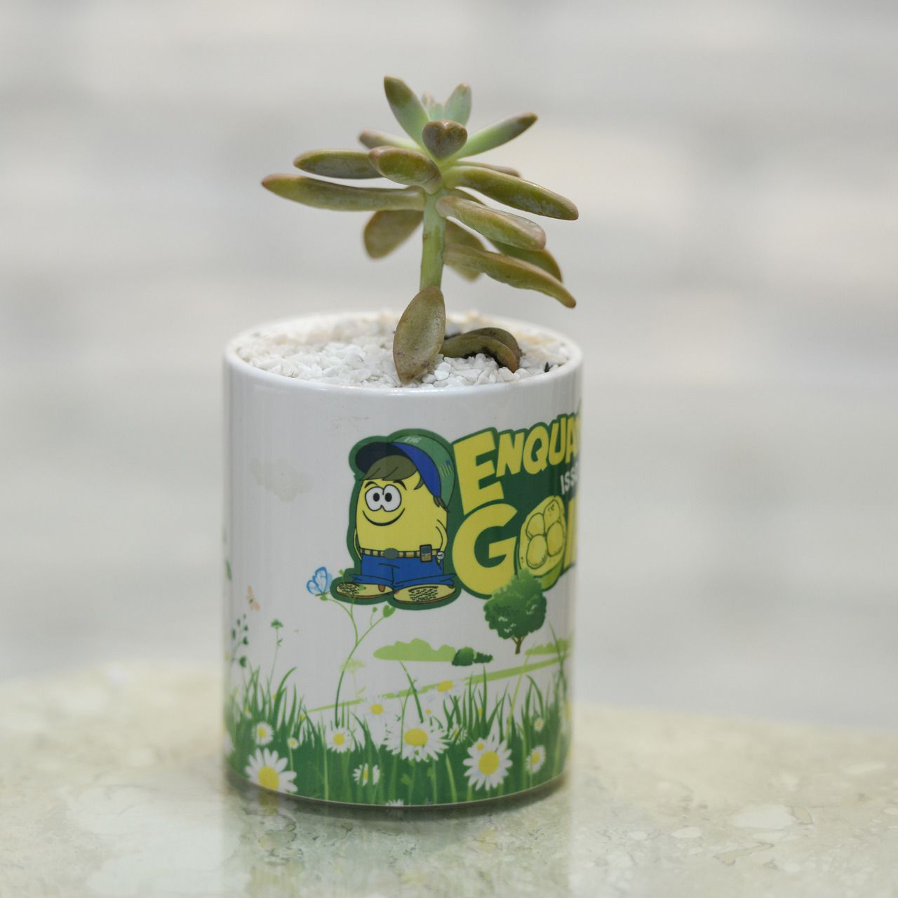 Planta na Caneca 2x1 - Cacto + Suculenta